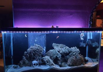 Living room aquarium lit up by Purple Wyze Lightstrip