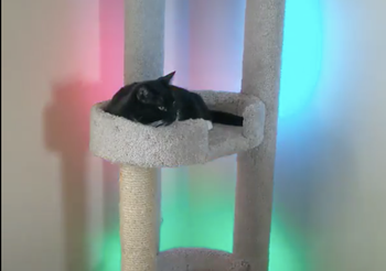 Cat stand light up with multiple colors from Wyze Lightstrip Pro